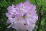 Atelier de création d'un parfum naturel de type floral