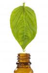 Apprendre à créer un parfum d'ambiance pour diffuseur et s'initier aux pots-pourris